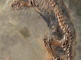 济南天桥化石收购成交价格多少