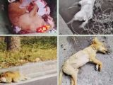 上海小動物尸體無害化處理200元起 24小時上門接收