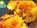 西安薯小帅烤红薯加盟费