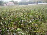 湖北哪里有红花大果油茶树苗批发 大红花油茶种苗多少钱一株