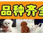 武汉狗场直销各种幼犬一包纯种健康可送货一签活体协议