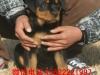 广州哪里有宠物狗出售