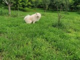 朝陽燕莎提供貓兒狗兒寄養單獨散養上門接送寄養托管寵物