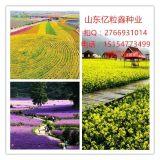 吉安牧草种子养殖种子绿化种子紫花苜蓿哪里有卖的