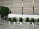 重庆轩屺花木酒店、办公室、写字楼等绿植租赁