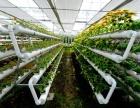 大成VR培训中心与您探索VR技术在农业领域上的应用