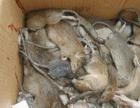 没有杀不了的老鼠、蟑螂、蚊子苍蝇、白蚁、跳蚤