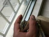 荷泽长期出售各种松鼠
