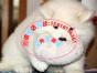 本地出售微笑天使萨摩耶 健康保障 可上门挑选