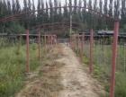大武口森林公园10亩园子出租