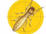 荔湾区灭白蚁公司,家里彻底除白蚁,白蚁防治员科学杀白蚁