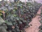土地 自家百亩葡萄园