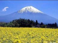 日本东京五天跟团游