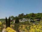 高台子塔峪村西沟天台峪园林式墓园