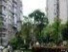 沙冲路绿苑小区天源 1室1厅32平米 精装修 半年付押一