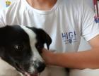 上海宠物训练 浦东宠物狗训练 活动价2千机会难