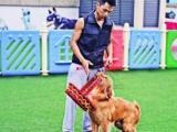 专业宠物训练寄养.上门训犬服务专人管理环境优美舒适