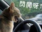 考驾照的朋友看过来…