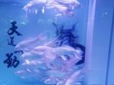 昆明专业上门清洗鱼缸 过滤系统维护及更换