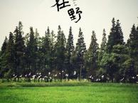 上海可容纳千人户外活动场地在长兴岛郊野公园大草坪