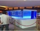 海洋展活体企鹅展览展示