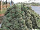 海南骏发园林绿化(养护)施工队