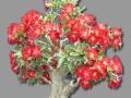 沁园春花卉植物出租、植物租摆、养护,批发零售