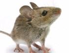 专业的灭鼠公司 上海英信灭鼠除虫公司
