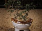 厂家直销zakka 迷你小优质陶瓷花盆容器、多肉植物花盆