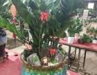 潢川流星花卉~批发室内绿植花卉,花盆