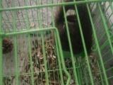 自己家养的魔王松鼠