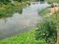 小北门外纪南枣林铺 鱼塘和养殖场 平房