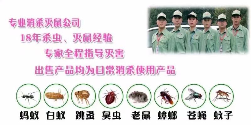 酒店除虫 商场除虫 工厂等灭鼠除虫 清波专业20年