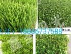 鑫圣阳光种子催芽机种子发芽机芽苗机麦草催芽机72p