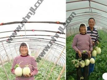 上海周边农家乐旅游游 采桑葚摘甜瓜 五彩番茄 钓鱼烧烤划船