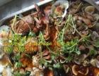 广州海鲜大咖海鲜大杂烩加盟【海鲜大咖】主题餐厅加盟