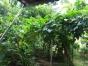 超值住宅园丁小区 155平 带车位 有地种菜种瓜果