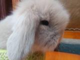 宠物兔批发零售
