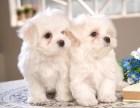 精品西施犬 保纯保健康 疫苗和驱虫均已做完 可签协议