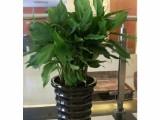 成都郫县办公鲜花绿植租赁,园林园艺,养护种植