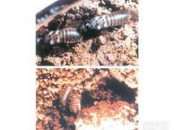 东莞防治白蚁中心,常平防治白蚁,大岭山防治白蚁,白蚁协会单位