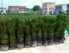 南沙区工厂绿化养护 工厂绿化工程 别墅园林装修种草种树