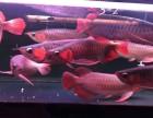 专业鱼缸换水保养