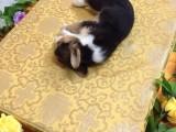 狗狗去世了处理 宠物安葬