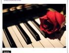 钢琴弹奏中的看谱与背谱