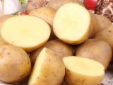 只限浙江沪皖 新鲜黄土豆 洋芋 无公害绿色蔬菜生态种植