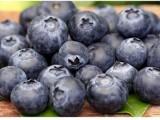 珠三角智利蓝莓进口清关服务