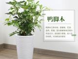 廣州市海珠區廣州之窗大廈綠植出租