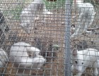 广州宠物狐狸哪里有卖的,多少钱