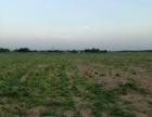 农用耕地出租 一百到几百亩